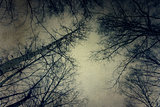 Grunge Tree Branches over Sky