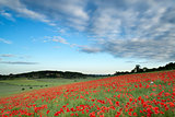 Stunning poppy field landscape under Summer sunset sky