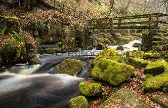 Autumn Fall forest landscape stream flowing through golden vibra