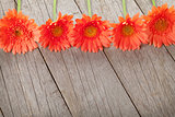 Wooden background with orange gerbera