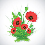 Poppy flowers bouquet.