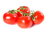 Bunch of ripe tomato