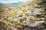 Stack Of Rocks On Norwegian Mountain, Norway Nature