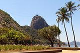 Mountain Sugarloaf square palm tree red beach, Rio de Janeiro