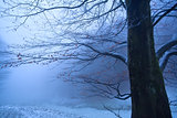 tree in winter foggy morning