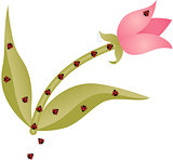 Tulip and ladybirds