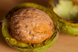 walnut ripe