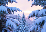 Beautiful winter forest