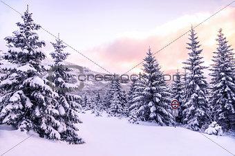 Beautiful winter forest landscape