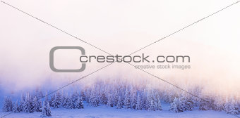 Beautiful winter forest border