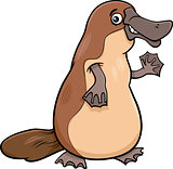 platypus animal cartoon illustartion