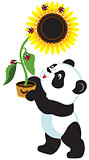 cartoon panda holding a sunflower