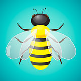 Bee Vector Illustration