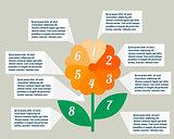 Flower infographics