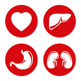 Human internal organs vector icons set.