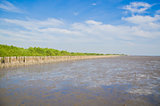 Landscape view of coastal mangrove forest