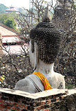 The head is large sitting Buddha
