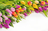 Colorful Tulips Flowers