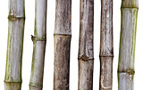 Dry stalks of bamboo