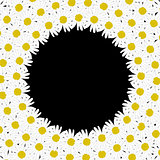 Circle frame made of daisy flowers