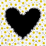 Heart made of daisy flowers
