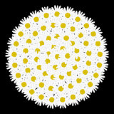 White circle frame shaped daisy flower