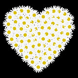 White heart shaped daisy flower