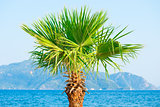 palm tree growing near the sea on the background of mountains