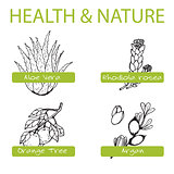 Handdrawn Set - Health and Nature. Collection of Medicine Herbs