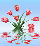 Red tulips in water