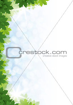 Green maple leaves against the blue sky. Background.