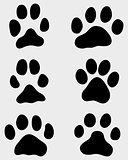 paw of dogs