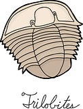 Single Trilobite Drawing