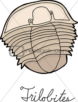 Single Trilobite Drawing