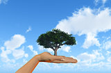 Hand holding tree against a blue sky