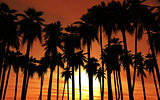 Sunset palm trees