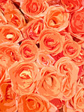 orange roses background