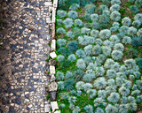 Cobbled Road and Green Plants in San Giorgio Fortress in Lisbon,