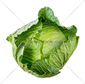 Cabbage isolated on white