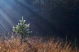morning sunbeams in misty forest