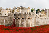 Red poppies in the moat of the Tower of London