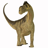 Camarasaurus on White