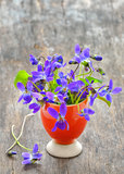 Viola cornuta flowers