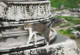 Cat in Ephesus