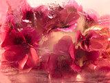 Frozen   flower of   geranium
