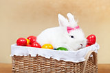Cute easter bunny sitting in basket with colorful eggs - closeup