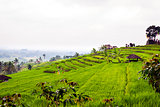 Rice fileds terraces with fresh green rice in Jatiluwih, Bali, I
