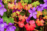 Colored flowers and leaves in Autumn