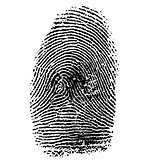 Vector illustration of fingerprint