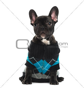 French Bulldog dressed